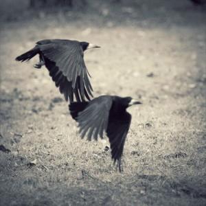 每日一句经典:如果你不能飞,那就跑;如果跑不动,那就走;实在走不了,那就爬。 无论做什么,你都要勇往直前。