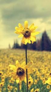 每日一句经典:春天的特色只有在冬天才能认清,在火炉背后,才能吟出最好的五月诗篇。 ——海涅